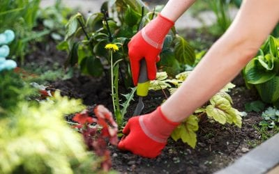 Weed Control in 6 Easy Steps